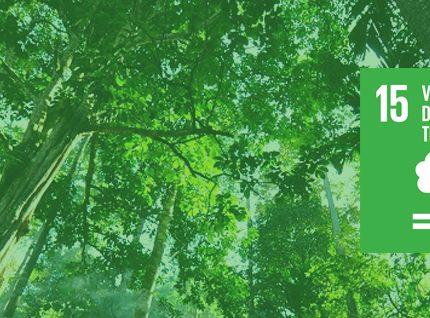 #ODS 15: Vida de ecosistemas terrestres